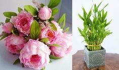8 Μοναδικά φυτά που φέρνουν τύχη στο σπίτι! Glass Vase, Plants, Home Decor, Decoration, Decor, Decoration Home, Room Decor, Decorations, Plant