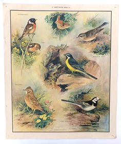 of the Nature Set - Insect Eating Birds - III Vintage Macmillans School / Education Posters Class Pictures, Poster Pictures, Nature Pictures, Vintage Prints, Vintage Posters, Christmas Presents For Mum, Classroom Charts, Bird Poster, Nature Posters