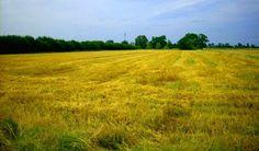 #dzialka #pole #Grodzisk #sprzedaz  wiecej: http://domy.pl/dzialka/grodziski-baranow-foremny_prostokat_6ha-780000-pln-60000m2-sfb/dol1702487590