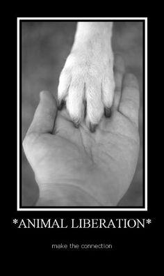 Google Afbeeldingen resultaat voor http://images2.fanpop.com/image/photos/13200000/Animal-Rights-animal-rights-13295971-351-589.jpg