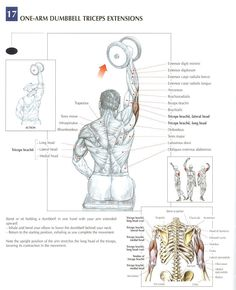 One Arm Dumbbell Extensions