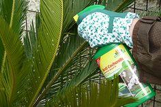 En cas de faible infestation, vous pouvez utiliser un anti-cochenilles du commerce. ©www.map-photos.com – N. & P. Mioulane
