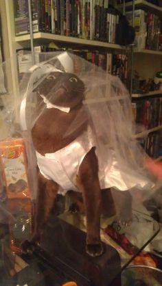 Esta noiva que subitamente se arrependeu.