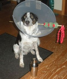 "Might as well make the best of a bad situation! Hillarious Pet Costume when they need the ""Cone"""