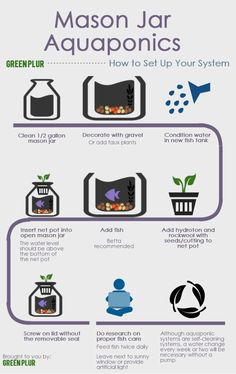 Here is a step-by-step instructional infographic on how to set up your Mason Jar Aquaponics system. Some things to keep in mind: A water change every week or two may be necessary as this is a simpl. Aquaponics System, Aquaponics Diy, Hydroponic Gardening, Organic Gardening, Aquaponics Greenhouse, Hydroponic Growing, Indoor Gardening, Aquaponics Supplies, Indoor Pond