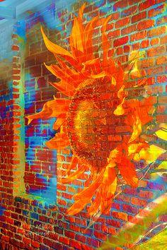 Sunflower Graffiti