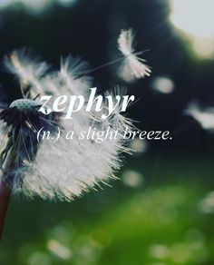 Love a zephyr...in the garden tickling the sunflowers or in the pasture whispering to the horses