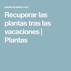 Recuperar las plantas tras las vacaciones   Plantas
