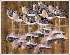 Art / Photography & Garden of the Far East Bird Artists, Nature Artists, Wildlife Paintings, Wildlife Art, Bird Artwork, Watercolor Bird, Watercolor Ideas, Bird Drawings, Bird Pictures