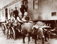 - Ox Cart meeting a train Immigration Canada, Immigration Policy, Horses, Ox, History, Dean, Cart, Animals, Google Search