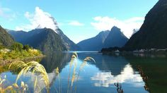 I WILL live in New Zealand someday!!