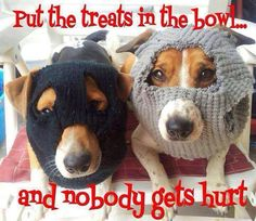Put the treats in the bowl..and nobody gets hurt.