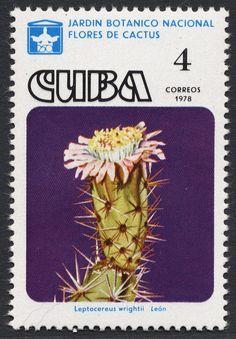 Znaczek: Leptocereus wrightii (Kuba) (Cactus) Mi:CU 2295 Cuba, Cactus, Valley Of Flowers, Flower Stamp, Vintage Stamps, Small Art, Cacti And Succulents, Flora, South America