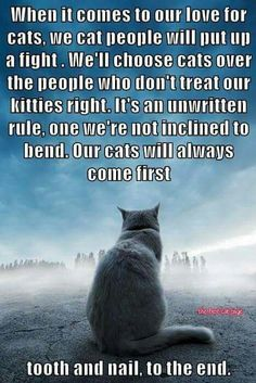 Cats will always come first!