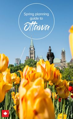 Spring is an ideal time to discover Ottawa's upbeat side. This guide is all you need to be enchanted by this sophisticated city on a spring weekend Atlantis Island, Ontario, Ottawa Tourism, Canadian Holidays, Tulip Festival, Visit Canada, Travel Guide, Travel Ideas, In Season Produce