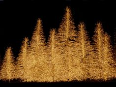 Image detail for -Christmas HD 311 - Holiday