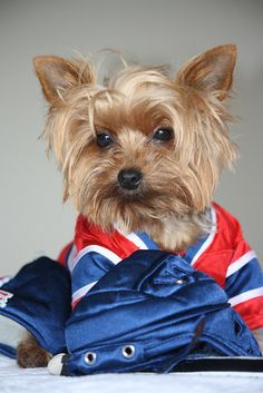 Rocket Rubin 5 minute penalty for roughing. Montreal Canadiens, Dog Football, Hockey Teams, Quebec, Yorkie, Puppies, Fan, Girls, Dogs