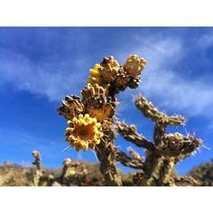 Bloom {Albuquerque NM USA}