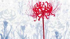 """Résultat de recherche d'images pour """"tokyo ghoul hide fleur"""""""