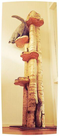 Ein natürlicher Kratzbaum - ganz einfach auch zum Selbstbauen