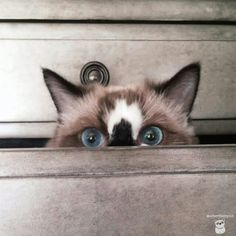 I know that look. I love it!