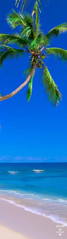 Fiji | LOLO❤︎