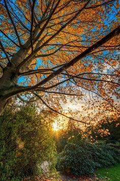autumn tree sun sunset fall beautiful landscape nature