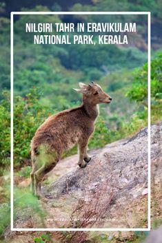 Eravikulam National Park Safari Guide: Must visit in Munnar - Explore with Ecokats