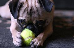 .. my tennis ball