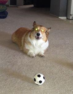 Laser eyes.