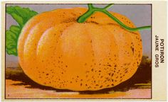 Vintage French pumpkin seed packet...