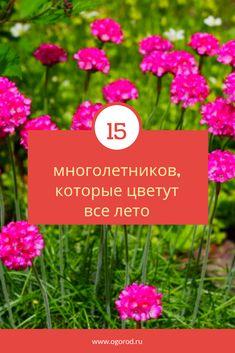 15 perennials that bloom all summer- 15 многолетников, которые цветут все лето Flowers for planting - Small Garden Design, Family Garden, Small Farm, Summer Garden, Flower Beds, Potted Plants, Indoor Garden, Beautiful Gardens, Garden Tools