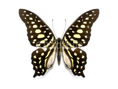 Stampa su telTropical butterfly. #stampa su #tela