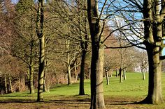 Winter Tree Stress Prevention & Protection Tips - Click to read...