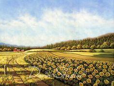 Sunflower Fields  Field of sunflowers with a red by davinstudios, $24.50
