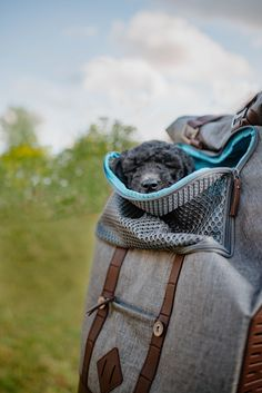 Travel Supplies, Commute To Work, Dog Activities, Everywhere You Go, Dog Travel, Pet Carriers, Bradley Mountain, Travel Accessories, Travel Style