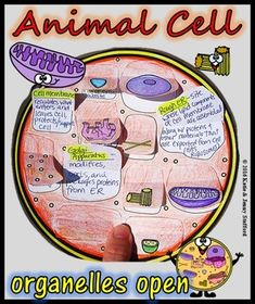 Animal Cell Organelle Cut and Paste Foldable by Mrs G Classroom Science Cells, Science Biology, Teaching Biology, Life Science, Forensic Science, Computer Science, 7th Grade Science, Middle School Science, Cells 5th Grade
