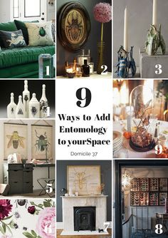 9 ways to add Entomology to your space | Entomology and decor | Entomology in Fall Decor