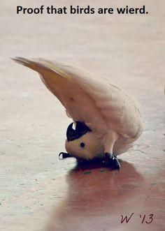Bird Humor.
