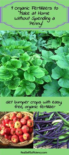 Organic Fertilizer (455×1024) | Eco Friendly Gardening |