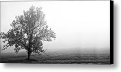 Tree In The Fog Canvas Print / Canvas Art By Andrew Soundarajan