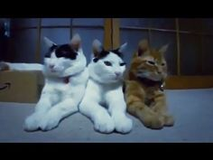 Cats In Action So Funny
