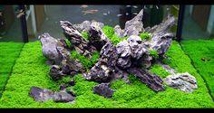 Iwagumi Rocks! #Iwagumi #Aquascaping