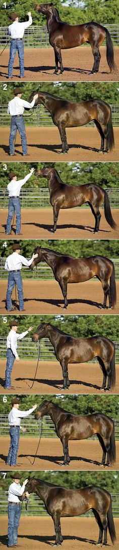 How to correct a head-shy horse - Clinton Anderson