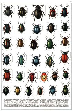 """Yakobson - """"Beetles of Russia"""": table 58 Insect Identification, Bug Type, Beetle Insect, Garden Bugs, Beautiful Bugs, Magazines For Kids, Bugs And Insects, Save The Bees, Animals Of The World"""