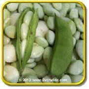 'White Dixie Butter Pea' - Lima Bean Seeds - Jumbo Seed Packet (120) by Everwilde Farms Inc.. $2.75. This excellent home garden variety, White Dixie Butter Pea, produces delicious small, limas. Three to four nearly round lima beans form inside each pod. Bush type lants grow from 16 to 24 inches high. This is a great variety for southern gardens, as it does well in hot weather!