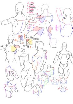 #练习 肩部简化 - wumingxuan520的插画 - pixiv Human Anatomy Drawing, Human Figure Drawing, Gesture Drawing, Anatomy Art, Guy Drawing, Drawing Skills, Drawing Poses, Body Reference Drawing, Anatomy Reference