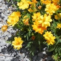 How to Save Money With Drought Tolerant Plants