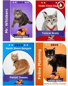 Kitten Bowl | Hallmark Channel #kittenbowl#.UtS47ZRb5fo.twitter