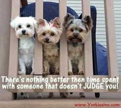 That's a great reason to own a pet ♡ especially a yorkie ♡♡♡♡